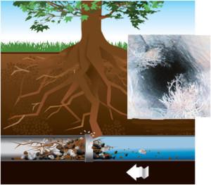 Wycinanie korzeni
